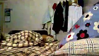 I puted the cam in the bedroom and take a video of sleeping blondie